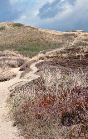 Weg durch Dünen